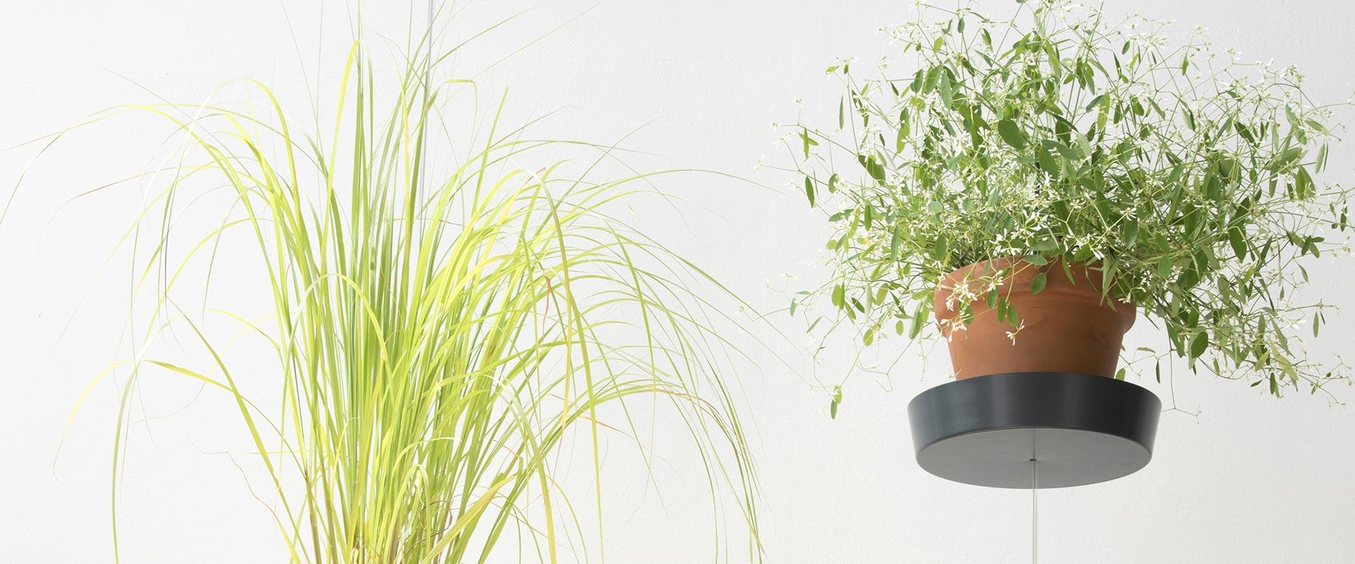 Support plante par TEEpots