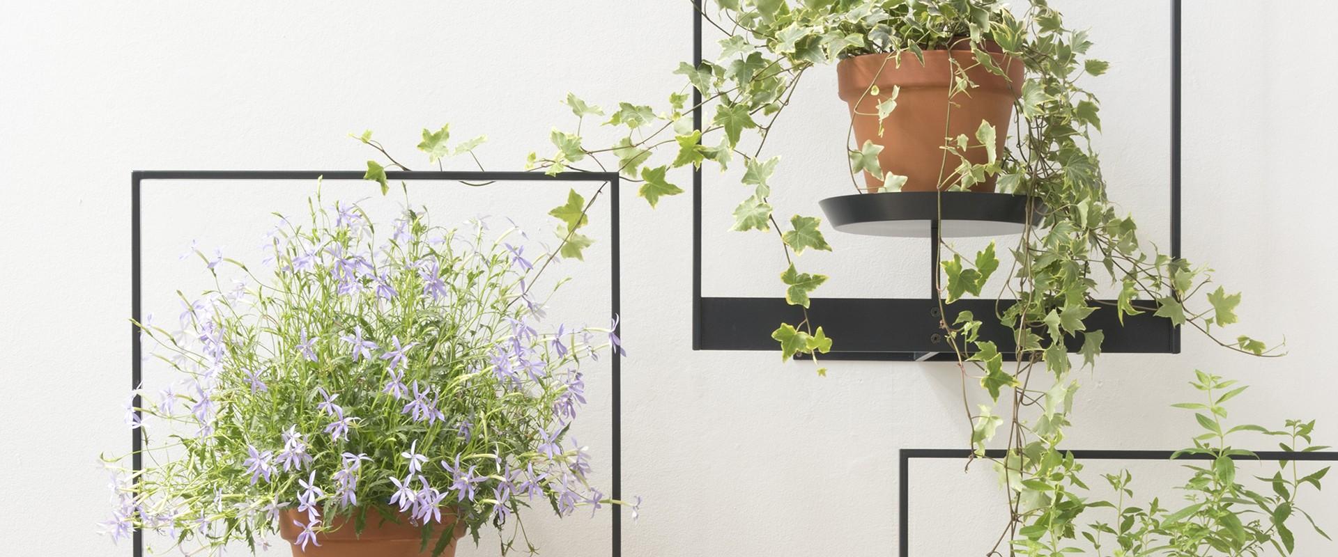 Étagère plante